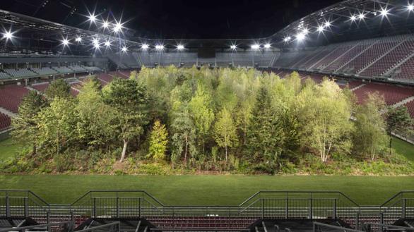 Áo biến sân bóng đá thành khu rừng 300 cây, có cây nặng 6 tấn - Ảnh 2.