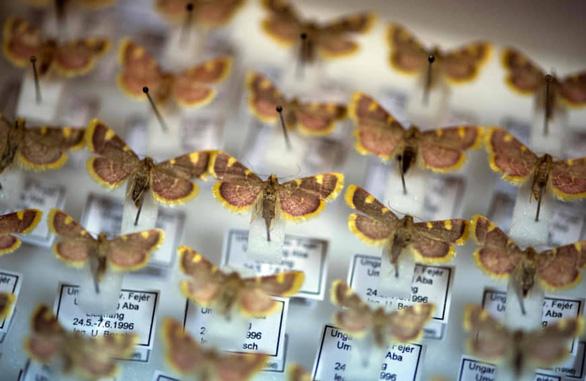 Đức chi 100 triệu euro cứu côn trùng - Ảnh 3.