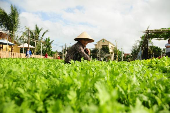 Hội An mở cửa làng rau Trà Quế chào đoàn khách xông đất Hội An - Ảnh 2.