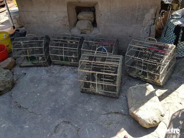 Chèo kéo du khách bán chim yến… phóng sinh - Ảnh 3.