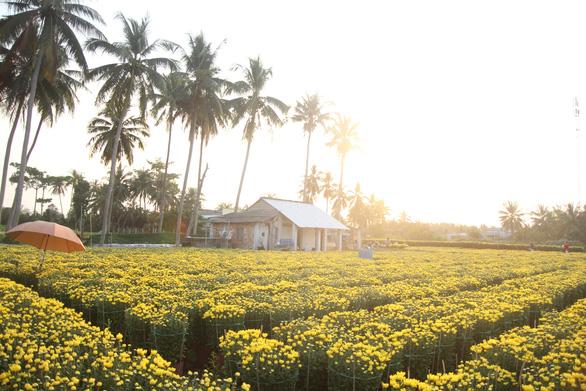 Từ flycam, làng hoa cạnh lò gạch cũ ở Cái Mơn đẹp ngẩn ngơ - Ảnh 6.