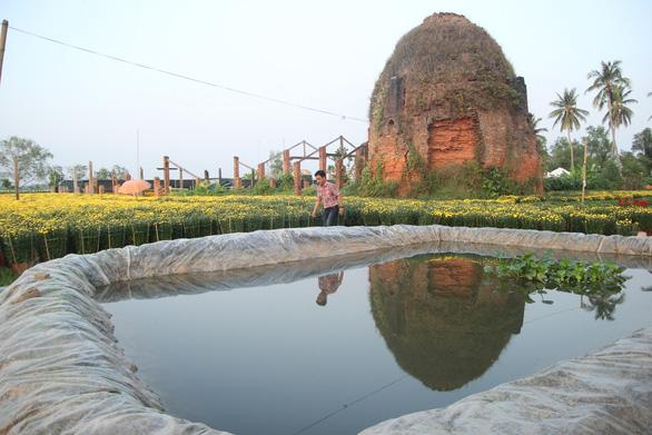 Từ flycam, làng hoa cạnh lò gạch cũ ở Cái Mơn đẹp ngẩn ngơ - Ảnh 7.