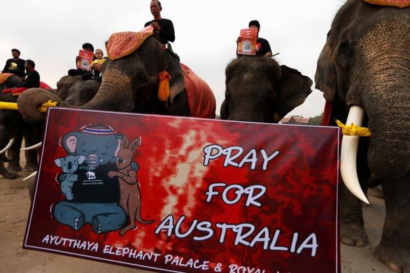 Voi Thái Lan buồn bã im lặng tưởng niệm động vật chết trong cháy rừng Úc - Ảnh 1.
