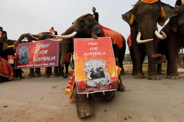 Voi Thái Lan buồn bã im lặng tưởng niệm động vật chết trong cháy rừng Úc - Ảnh 2.