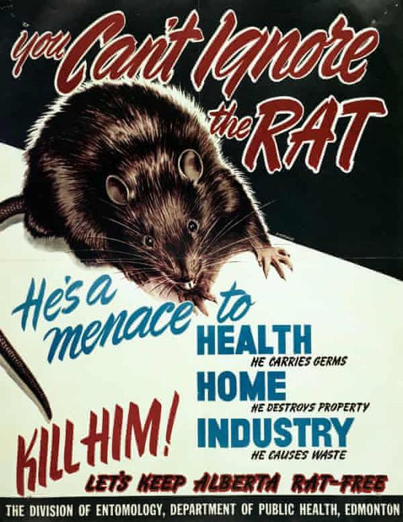 Nơi duy nhất trên thế giới 'quét sạch' loài chuột - Ảnh 3.