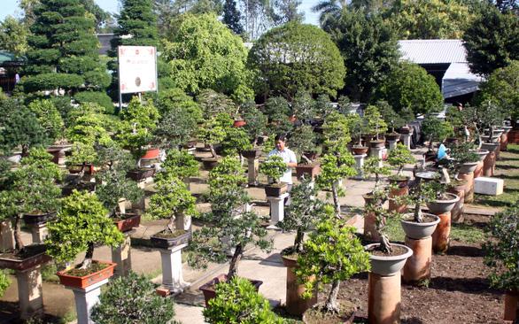 Hai Lúa mần bonsai bạc tỉ - Ảnh 1.