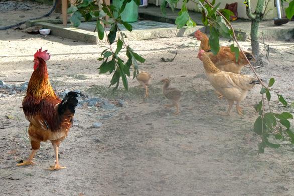Xách gà lên Sài Gòn cho con ăn tết, nó không lấy tui xách dìa lại - Ảnh 1.