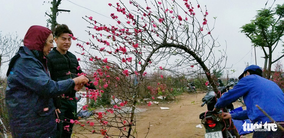 Đào Nhật Tân: Vào tận vườn chọn cành, ngã giá - Ảnh 3.