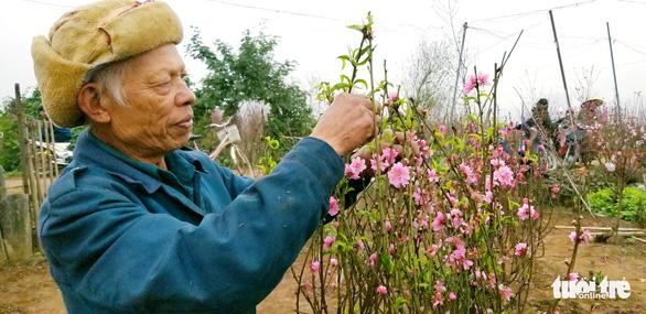 Đào Nhật Tân: Vào tận vườn chọn cành, ngã giá - Ảnh 2.