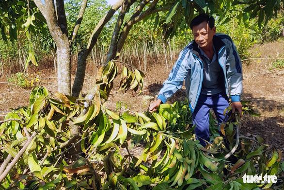Người dân bị voi rừng phá hoại tài sản nhận hỗ trợ 800 triệu đồng - Ảnh 2.