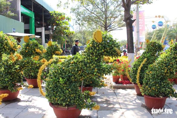 Quất bonsai tạo hình chuột đắt như tôm tươi - Ảnh 2.