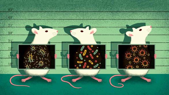 Vì sao chuột trở thành linh vật trong nghiên cứu khoa học? - Ảnh 2.