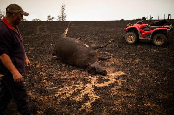 Thảm cảnh của người dân Úc trong mùa cháy rừng kinh hoàng - Ảnh 2.