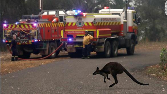 Thảm cảnh của người dân Úc trong mùa cháy rừng kinh hoàng - Ảnh 7.