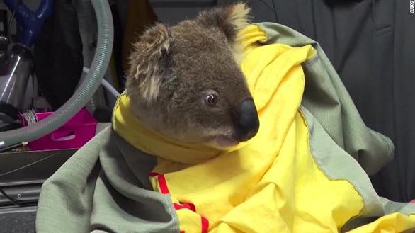 Thảm cảnh của người dân Úc trong mùa cháy rừng kinh hoàng - Ảnh 8.