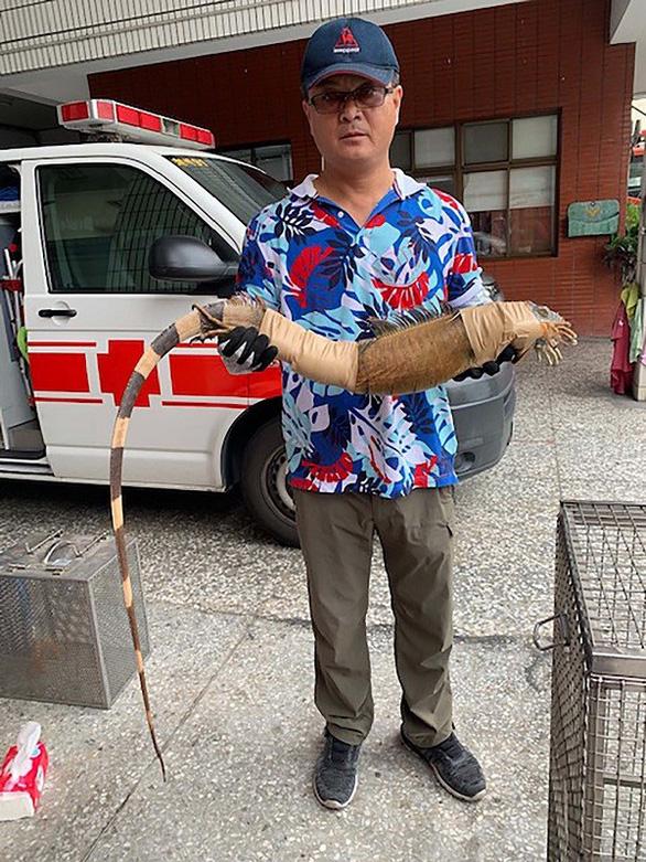 Cự đà xanh tràn ngập, chính quyền Đài Loan cầu cứu người dân bắt giúp - Ảnh 2.