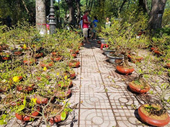 Sợ ngậm hàng, nhiều nhà vườn bắt đầu giảm giá hoa - Ảnh 4.