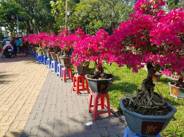 Sợ ngậm hàng, nhiều nhà vườn bắt đầu giảm giá hoa - Ảnh 8.