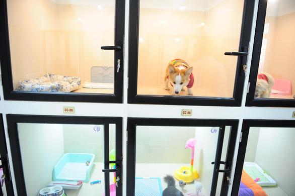 Khách sạn thú cưng giá 500.000 đồng/ngày nhộn nhịp ngày tết - Ảnh 4.