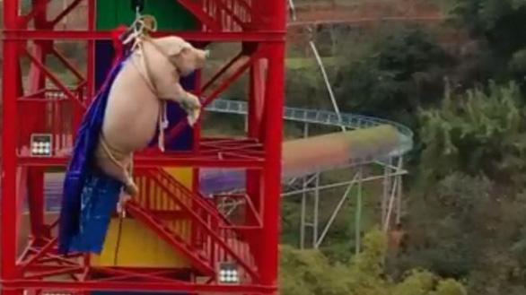Công viên chủ đề tại Trung Quốc bị chỉ trích vì dùng heo tiếp thị trò nhảy bungee - Ảnh 1.