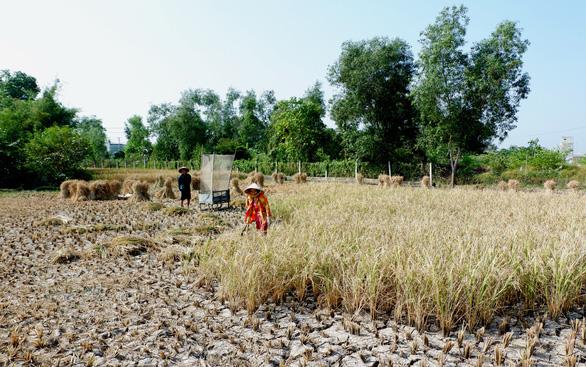 Gặt lúa giữa đồng trưa 27 tết, vợ chồng già cười tặng cả mùa xuân - Ảnh 3.