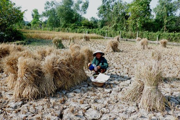 Gặt lúa giữa đồng trưa 27 tết, vợ chồng già cười tặng cả mùa xuân - Ảnh 4.