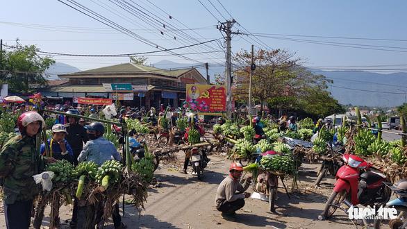Chuối Tân Long - 'thủ phủ chuối' miền Trung lo vỡ trận - Ảnh 1.