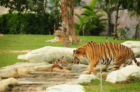 Ly kỳ chuyện đỡ đẻ cho… sư tử, làm bảo mẫu cho hổ - Ảnh 15.