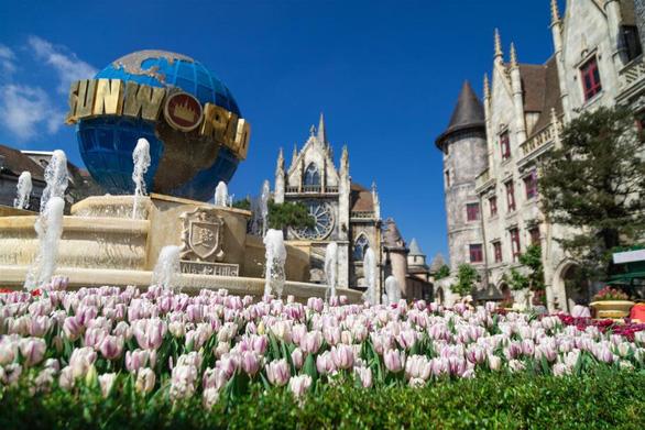 """Bắt trọn mùa hoa tulip đẹp """"rụng tim"""" ở Bà Nà Hills - Ảnh 2."""