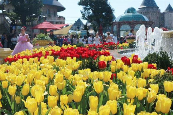 """Bắt trọn mùa hoa tulip đẹp """"rụng tim"""" ở Bà Nà Hills - Ảnh 4."""