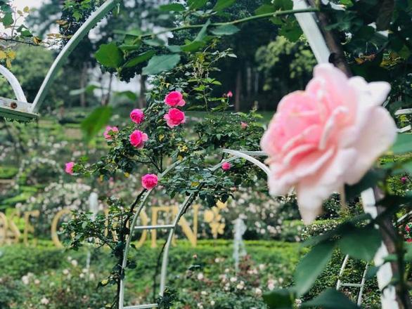 """Bắt trọn mùa hoa tulip đẹp """"rụng tim"""" ở Bà Nà Hills - Ảnh 7."""