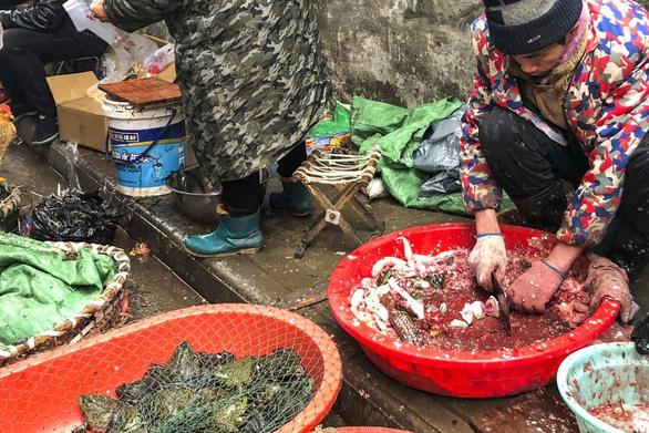 Trung Quốc cấm bán động vật hoang dã, 80 người chết vì virus corona mới - Ảnh 1.