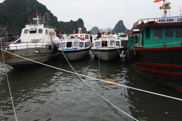 Nhiều địa phương Đông Bắc Bộ cấm biển, tăng cường ứng phó bão số 7 - Ảnh 1.