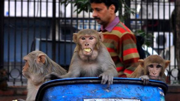 Tại sao các đại dịch của thế giới lại đến từ động vật? - Ảnh 2.