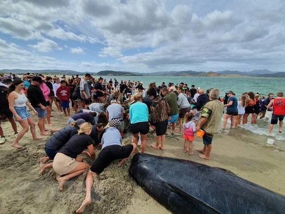 Cả ngàn người già trẻ, trai gái khẩn cấp cứu 11 cá voi mắc cạn - Ảnh 1.