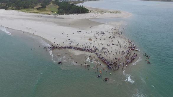 Cả ngàn người già trẻ, trai gái khẩn cấp cứu 11 cá voi mắc cạn - Ảnh 2.