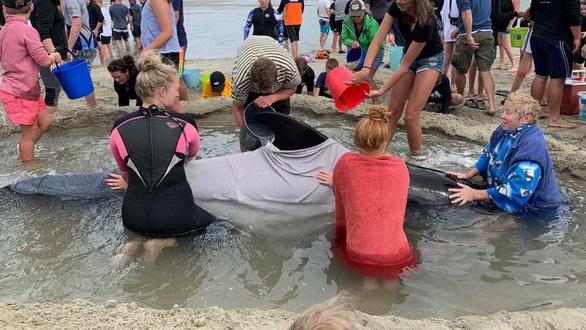 Cả ngàn người già trẻ, trai gái khẩn cấp cứu 11 cá voi mắc cạn - Ảnh 3.