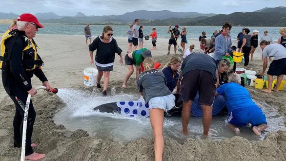 Cả ngàn người già trẻ, trai gái khẩn cấp cứu 11 cá voi mắc cạn - Ảnh 5.