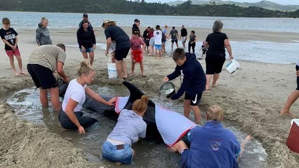 Cả ngàn người già trẻ, trai gái khẩn cấp cứu 11 cá voi mắc cạn - Ảnh 6.