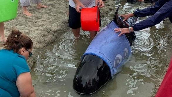 Cả ngàn người già trẻ, trai gái khẩn cấp cứu 11 cá voi mắc cạn - Ảnh 7.