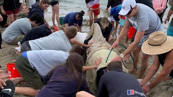 Cả ngàn người già trẻ, trai gái khẩn cấp cứu 11 cá voi mắc cạn - Ảnh 4.