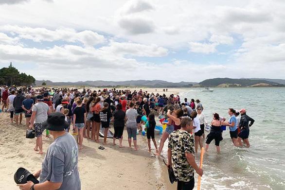Cả ngàn người già trẻ, trai gái khẩn cấp cứu 11 cá voi mắc cạn - Ảnh 8.