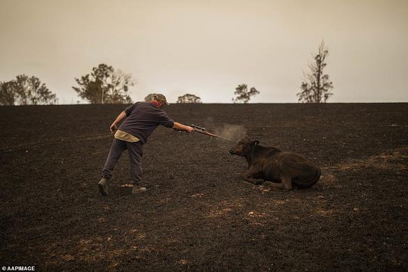 Khóc, vì gần nửa tỉ động vật ở Úc đã chết cùng cháy rừng - Ảnh 1.