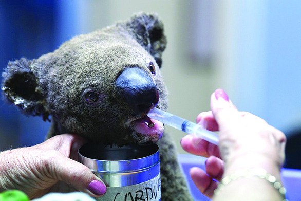 Khóc, vì gần nửa tỉ động vật ở Úc đã chết cùng cháy rừng - Ảnh 2.