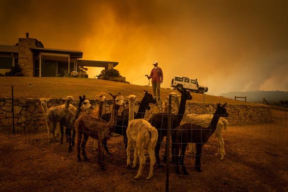 Khóc, vì gần nửa tỉ động vật ở Úc đã chết cùng cháy rừng - Ảnh 3.