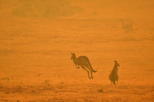 Úc đón mưa vàng, cháy rừng thuyên giảm - Ảnh 2.
