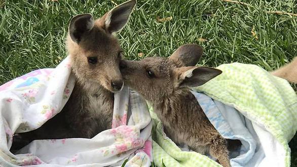 Những chiếc túi thấm đẫm tình yêu thương động vật gặp nạn - Ảnh 1.