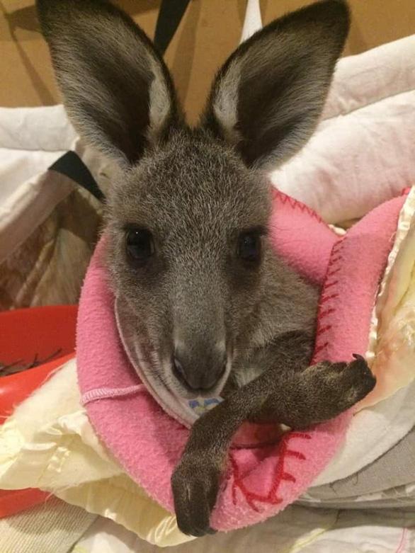 Những chiếc túi thấm đẫm tình yêu thương động vật gặp nạn - Ảnh 4.