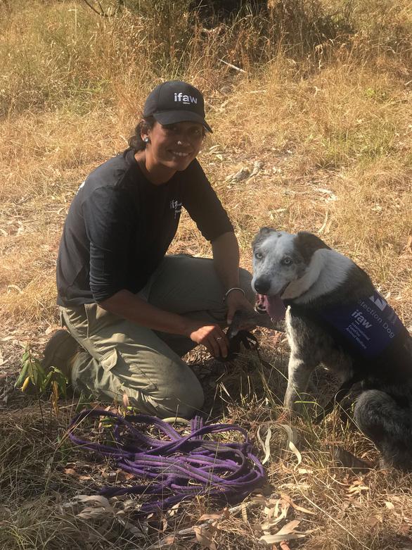 Chú chó dũng cảm giải cứu koala gặp nạn trong cháy rừng ở Úc - Ảnh 5.