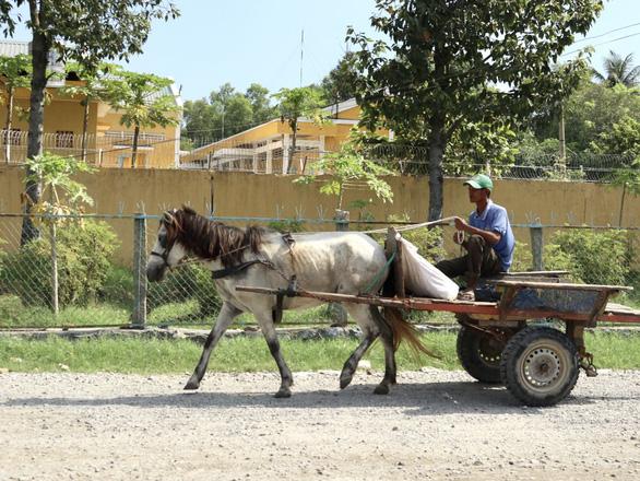 Những chiếc xe ngựa cuối cùng ở Bảy Núi - Ảnh 1.